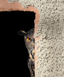 Whooo needs to die in your novel?