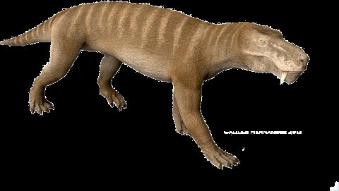 Gorgonopsid