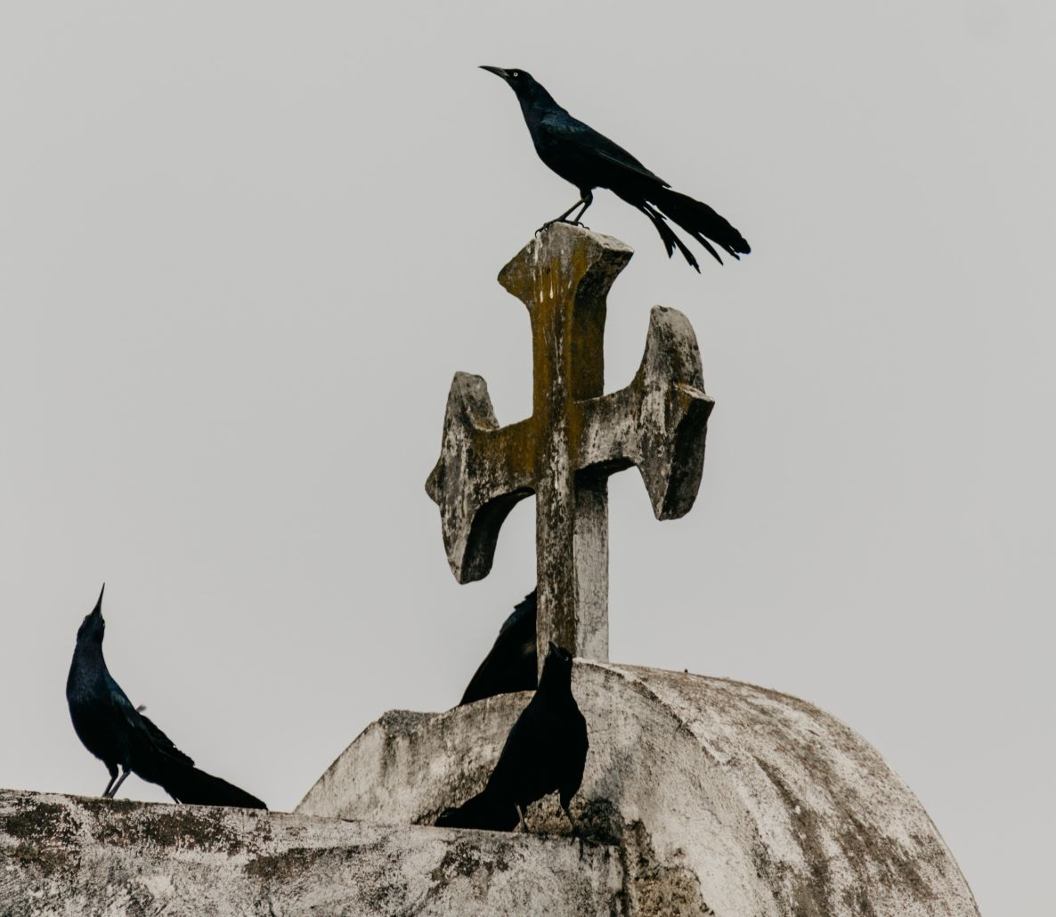 Crows on Cross