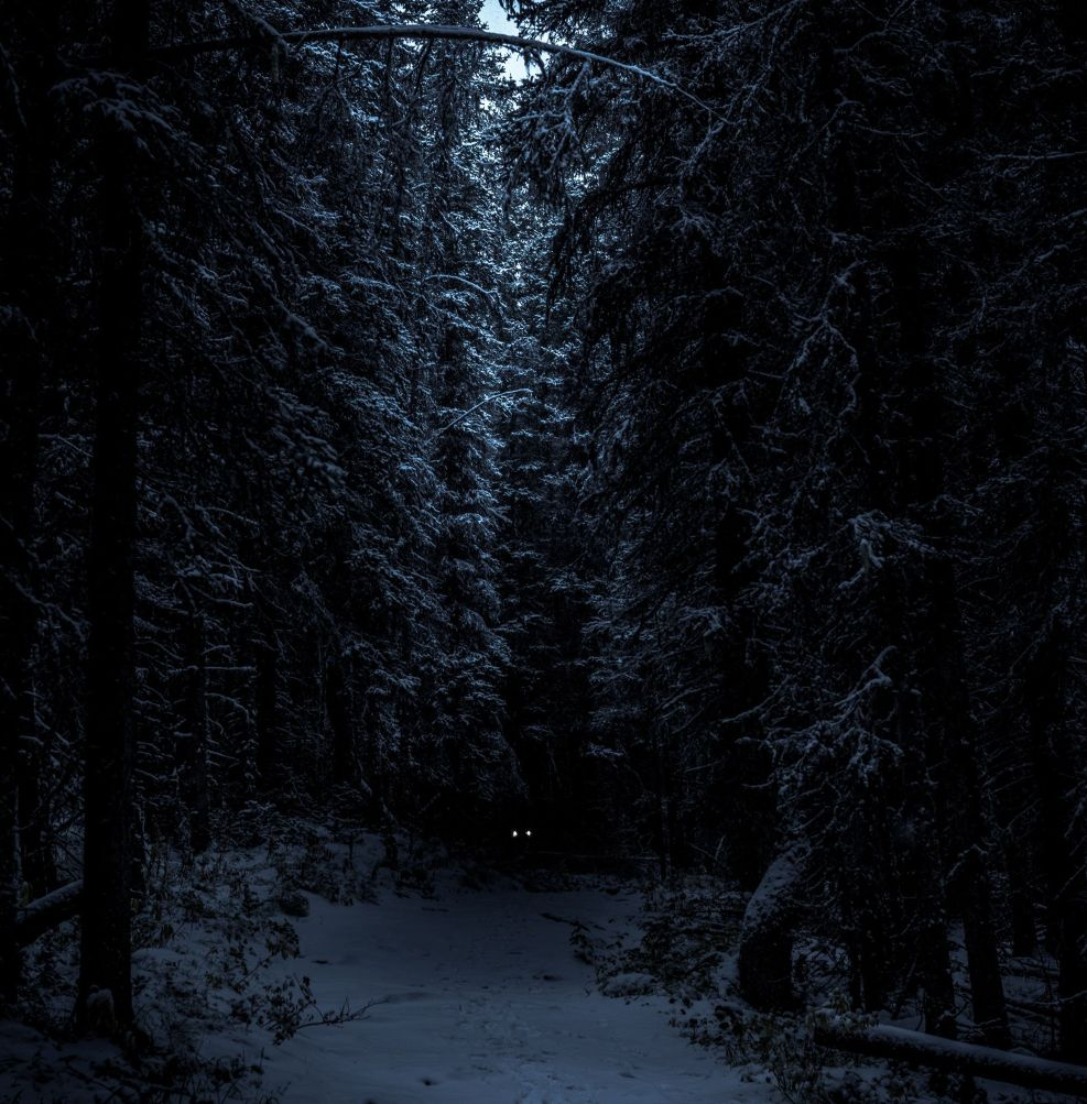 Dark Forest Horror